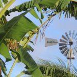 Grenzeloos ondernemen Curacao #4